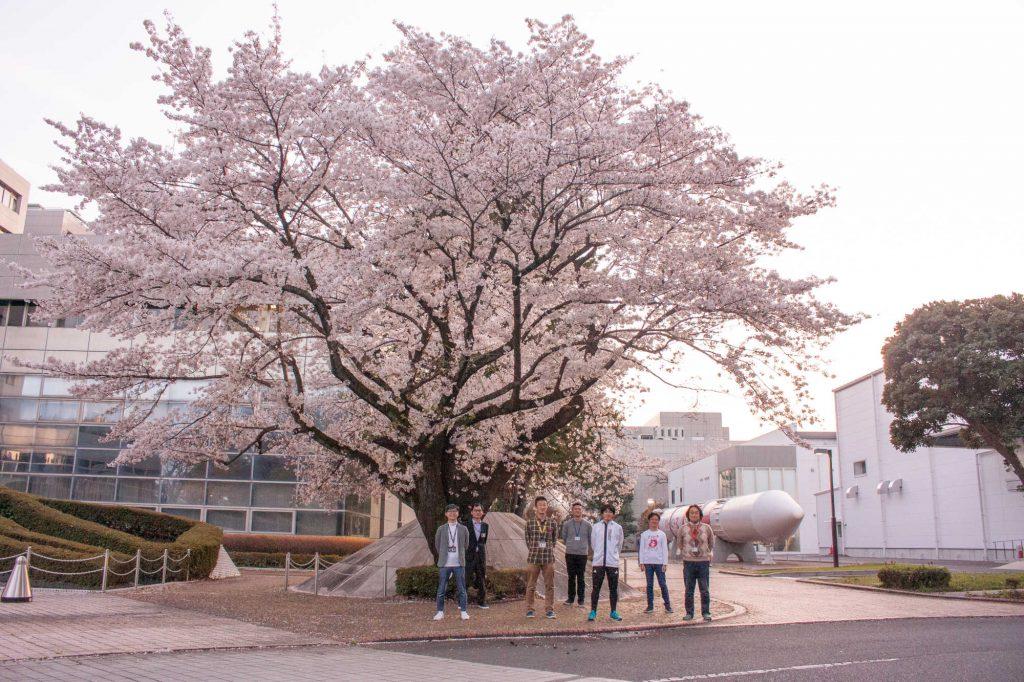 "<span class=""title"">宇宙研の桜が満開です</span>"